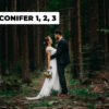 conifer cover